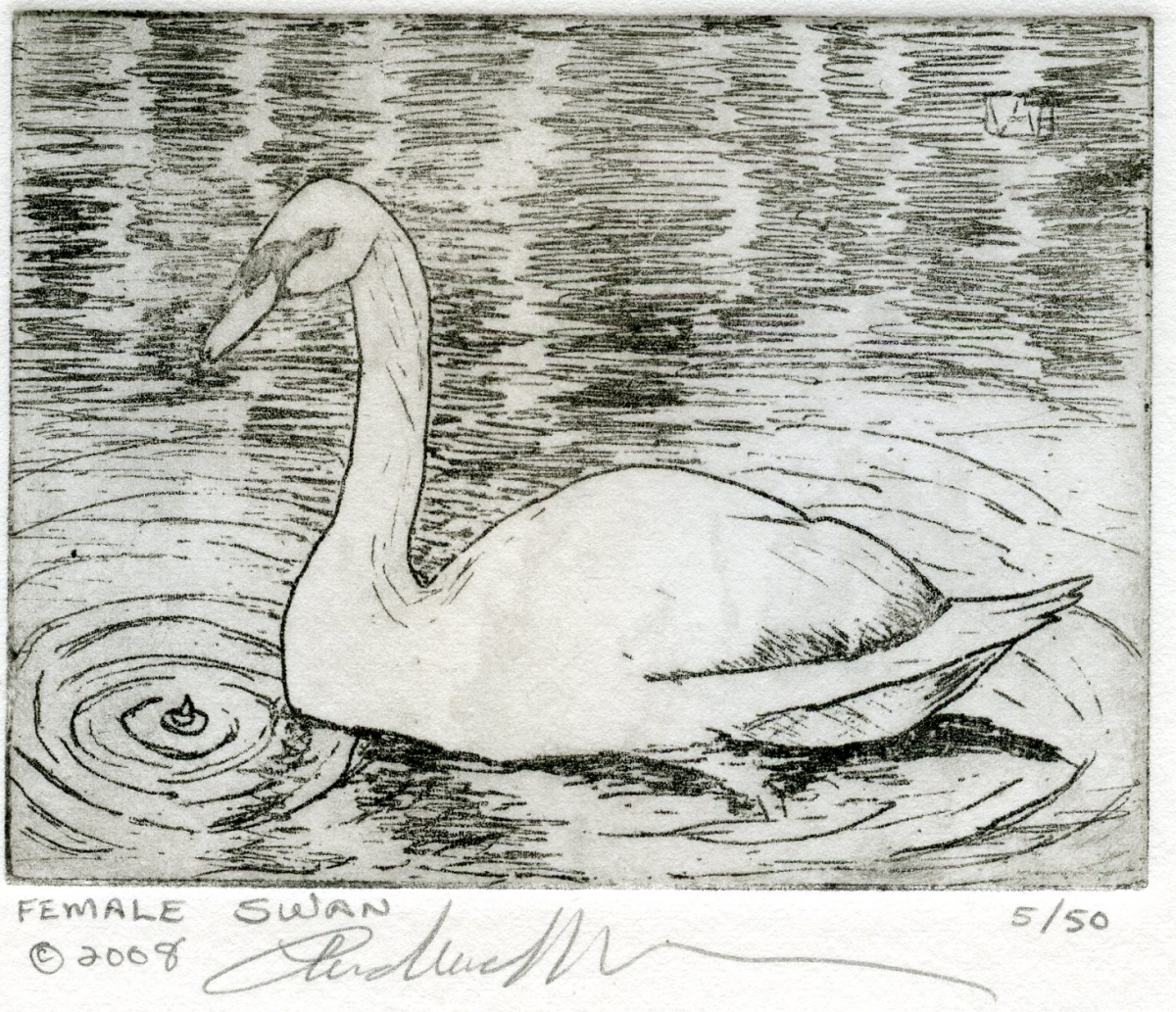 Female Swan (large view)