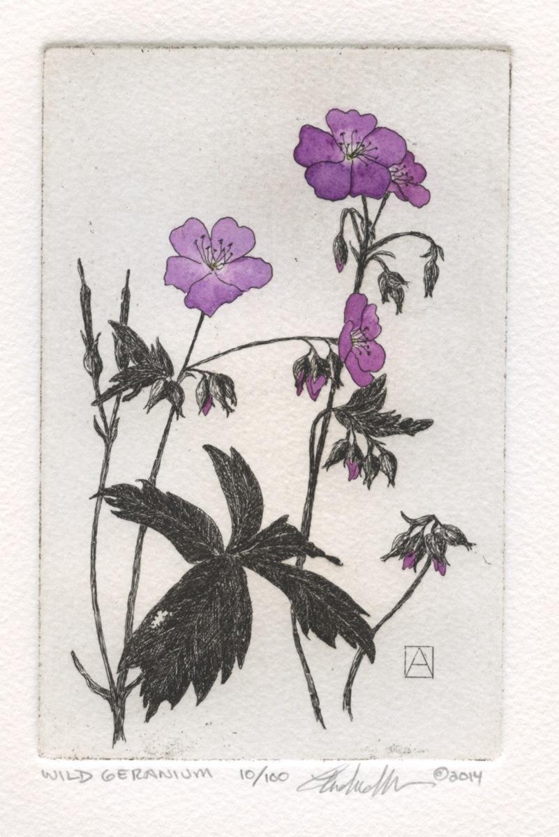 Wild Geranium (large view)