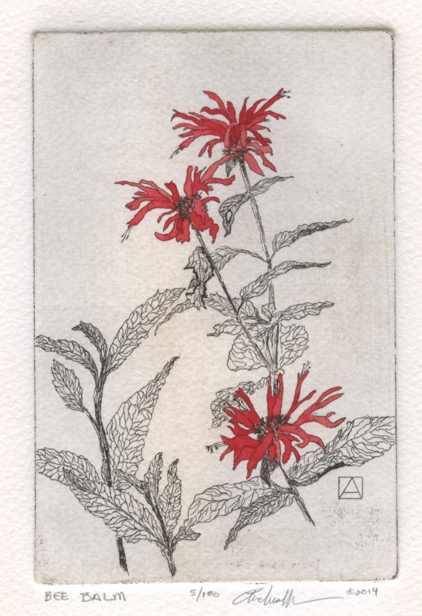 Bee Balm (large view)