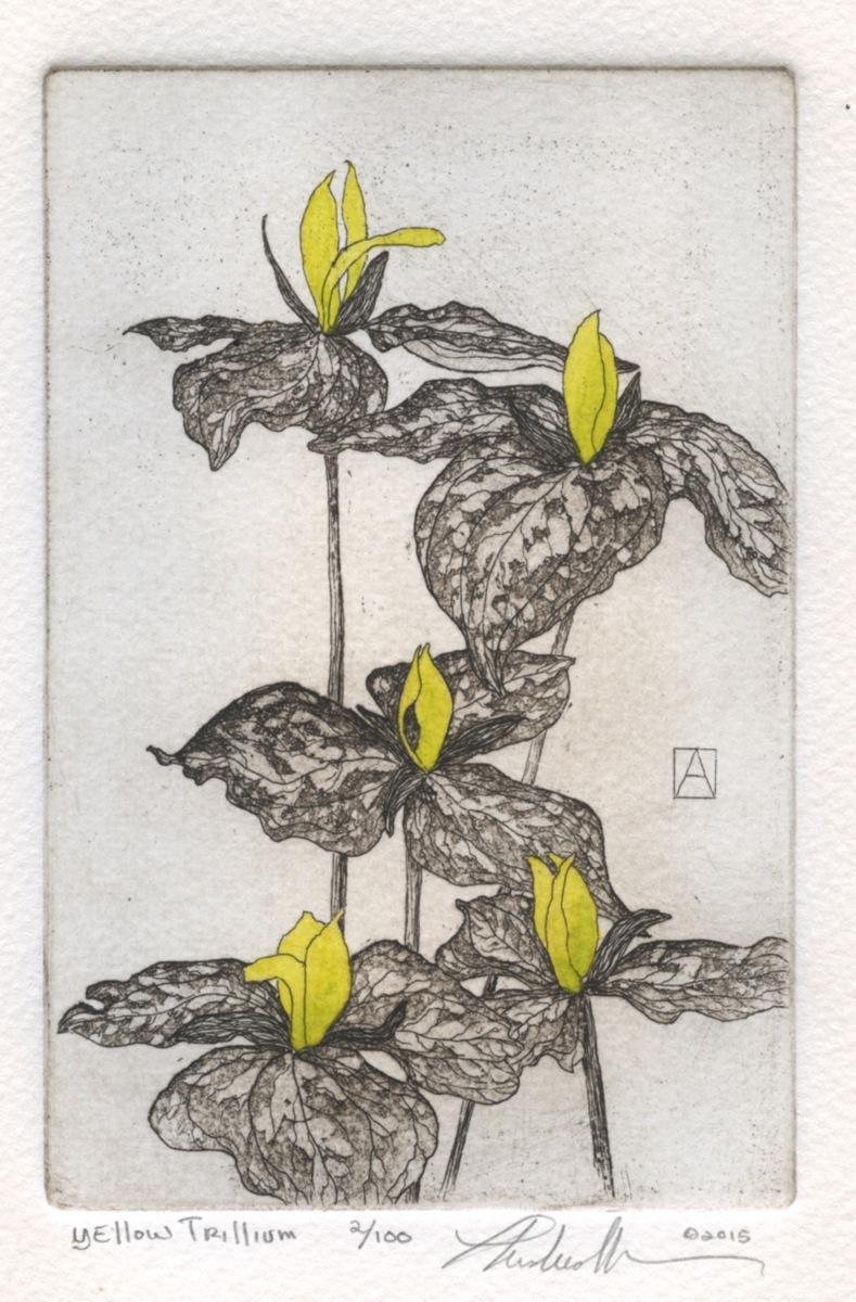 Yellow Trillium  (large view)