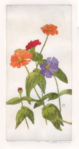 Zinnias (large view)