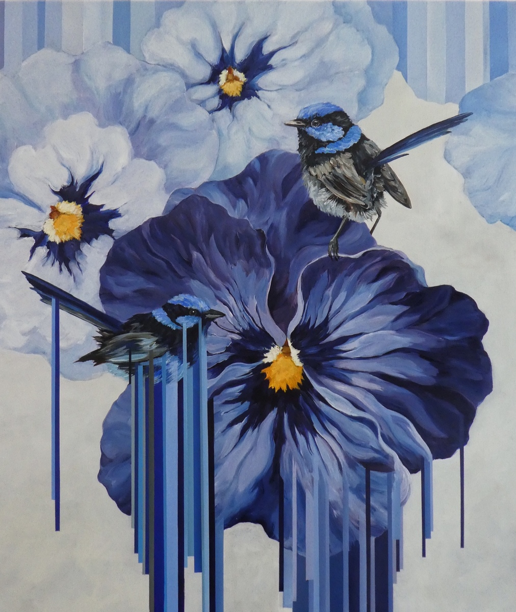Superb Blue Fairy Wrens (large view)