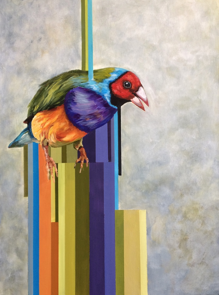 Gouldian Finch (large view)