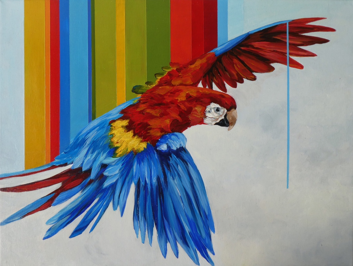 Macaw (large view)