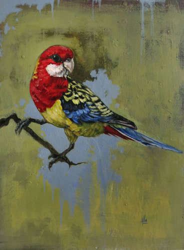 Eastern Rosella (large view)