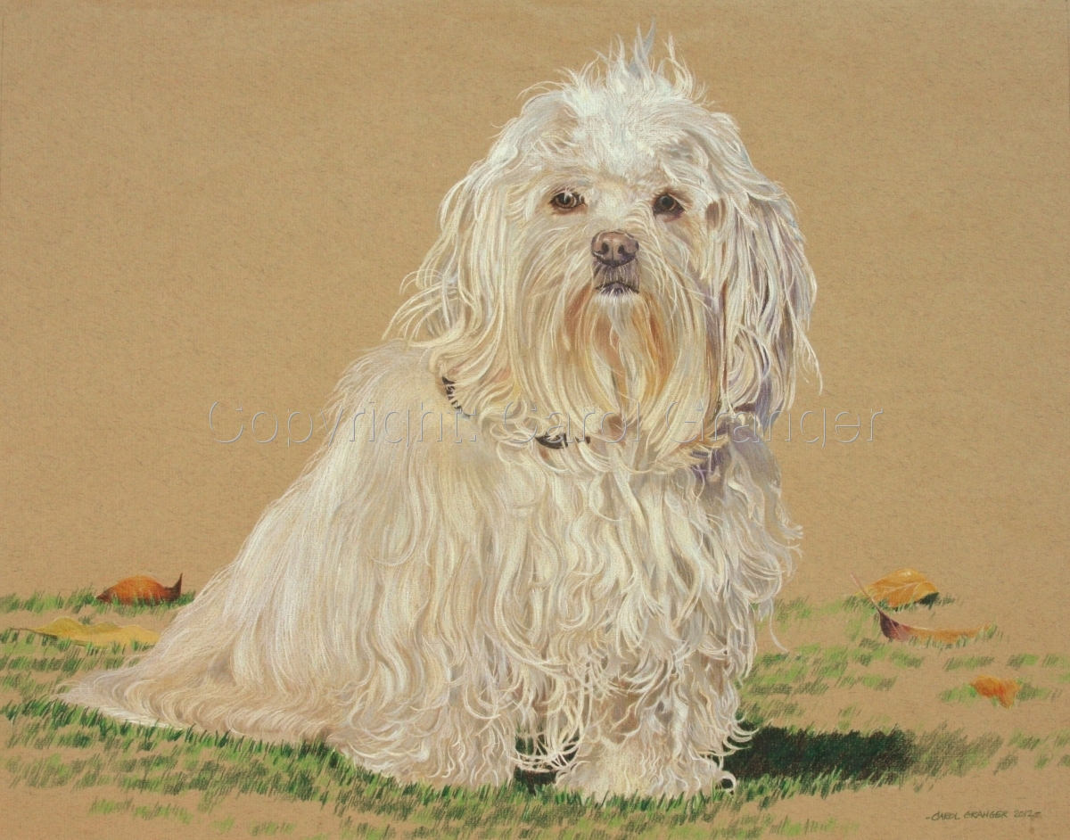 Colored Pencil animal portrait of a Maltese with white fur sitting on grass with fall leaves in background. (large view)