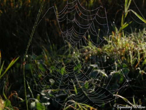 Spider Web (large view)
