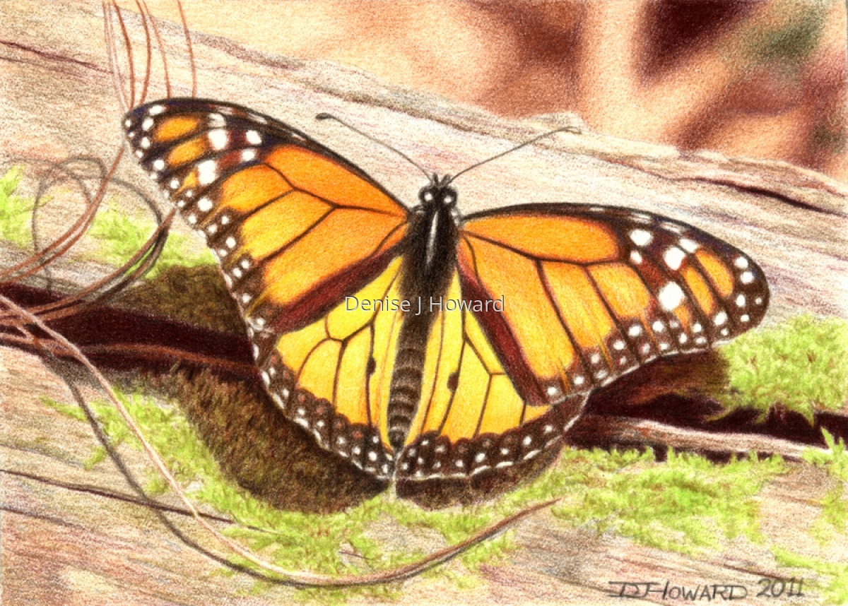 Monarch #2 (large view)