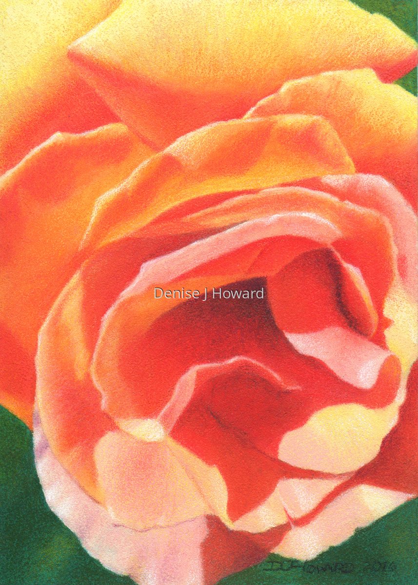 Peach Rose (large view)