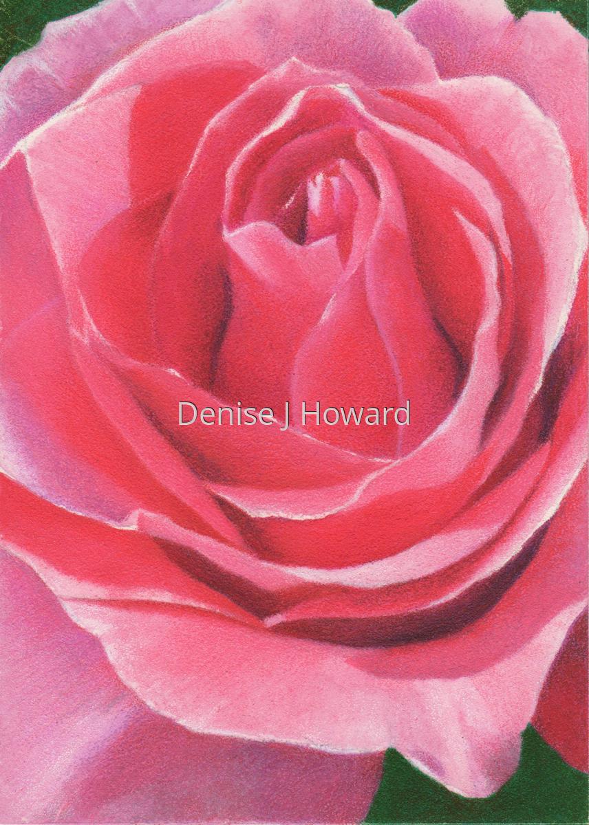 Pink Rose (large view)