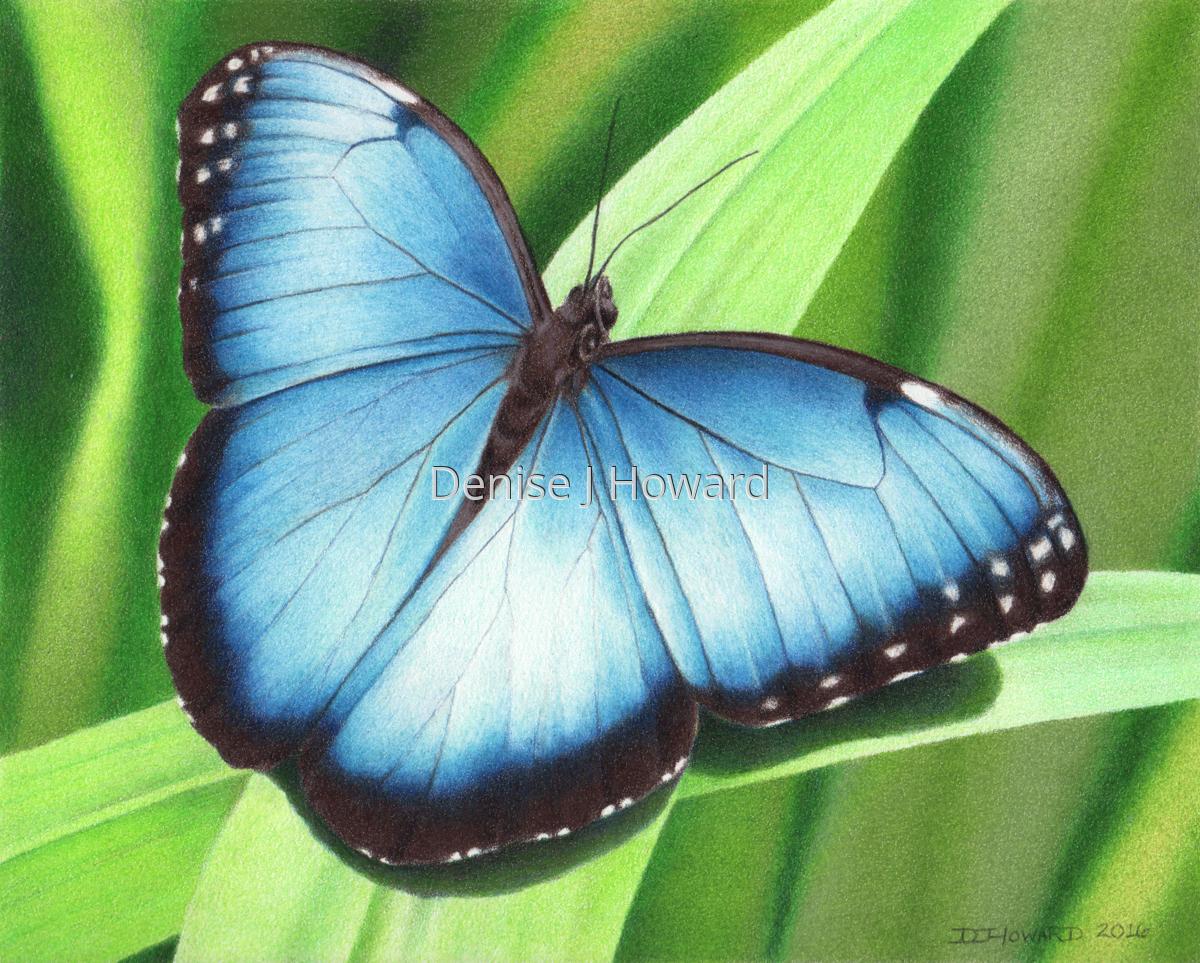 Blue Morpho #2 (large view)