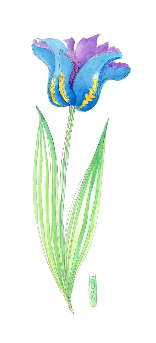 Blue Tulip (large view)