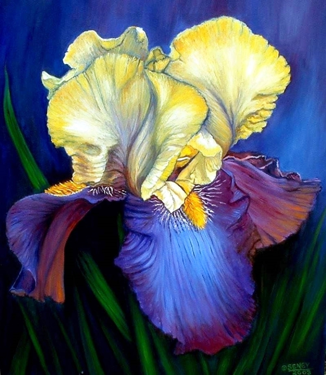BLUE IRIS (large view)