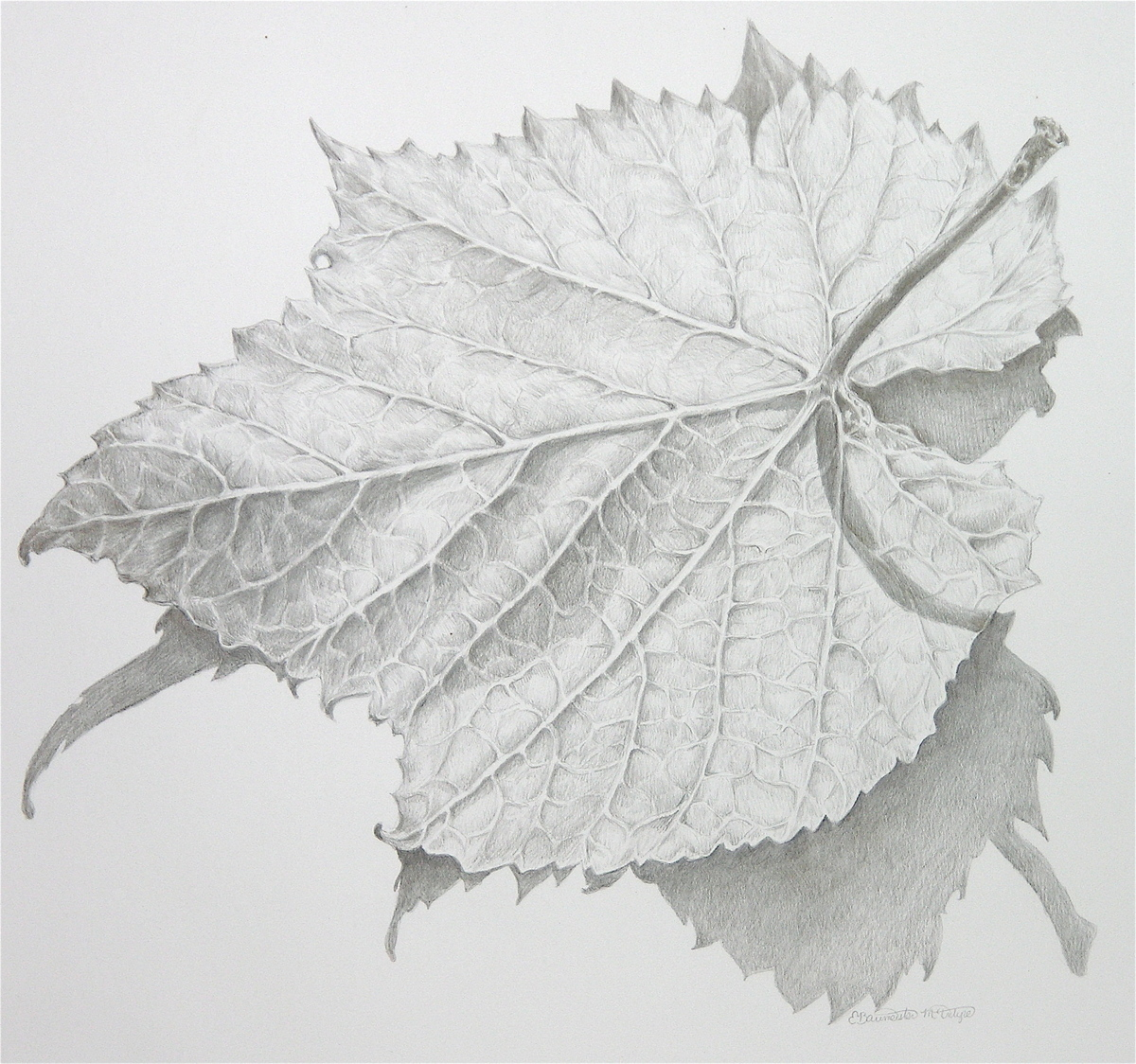 Wild Grape Leaf (large view)