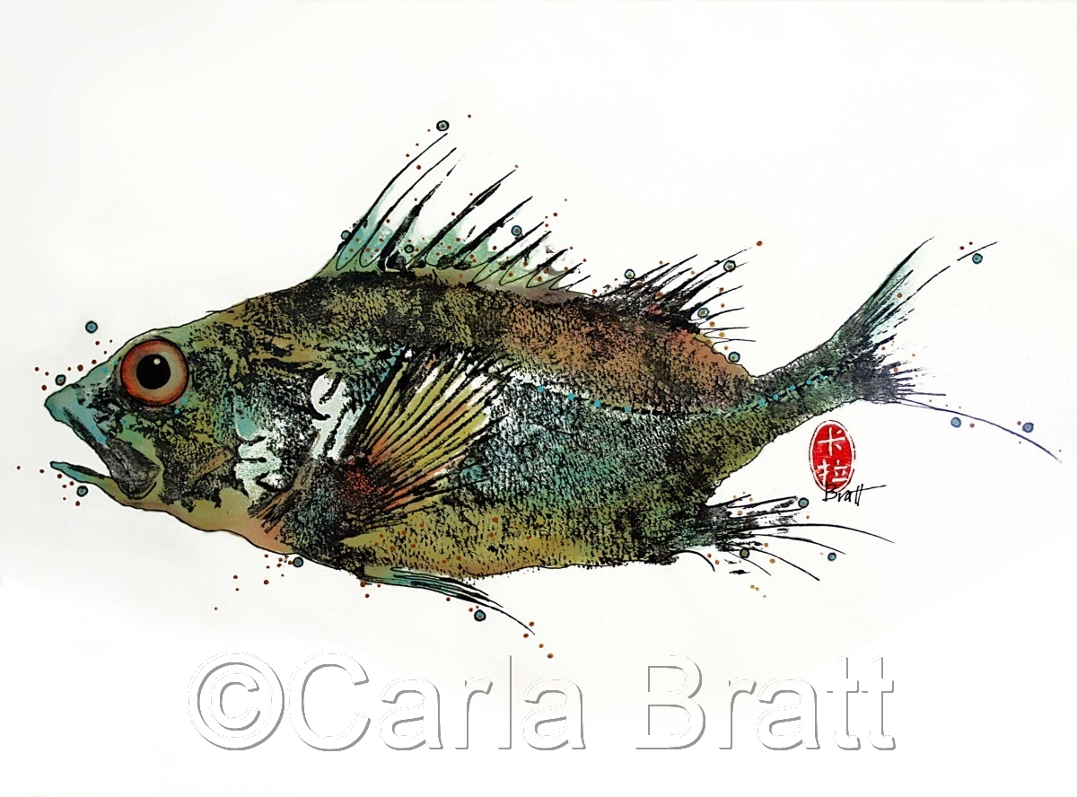 Pacific Rockfish (large view)