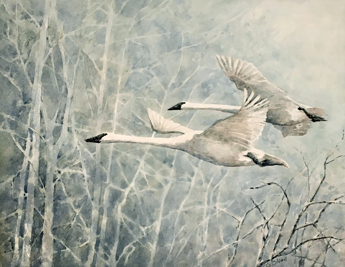 TRUMPETER SWANS (large view)