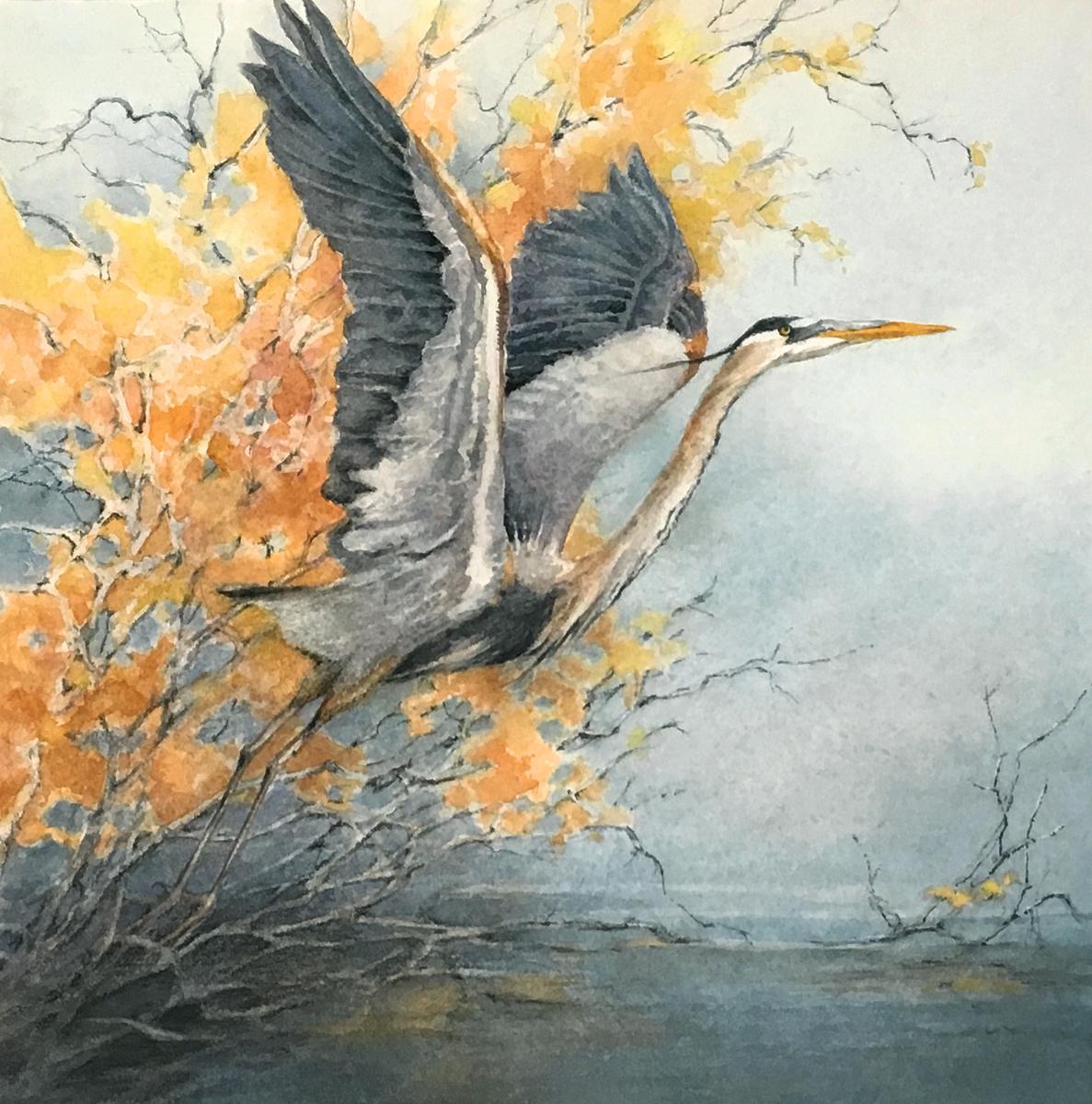 Gray Heron (large view)