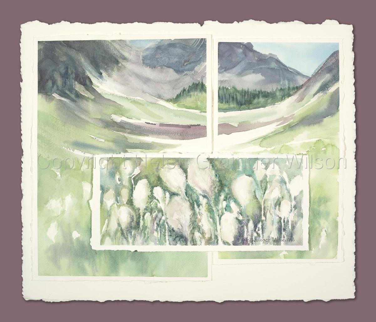 Waterton Beargrass by Helen Grainger Wilson (large view)