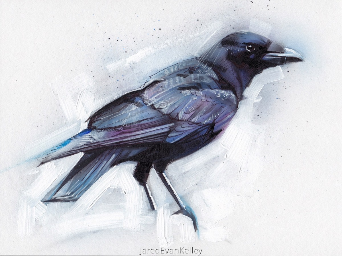 American Crow (large view)