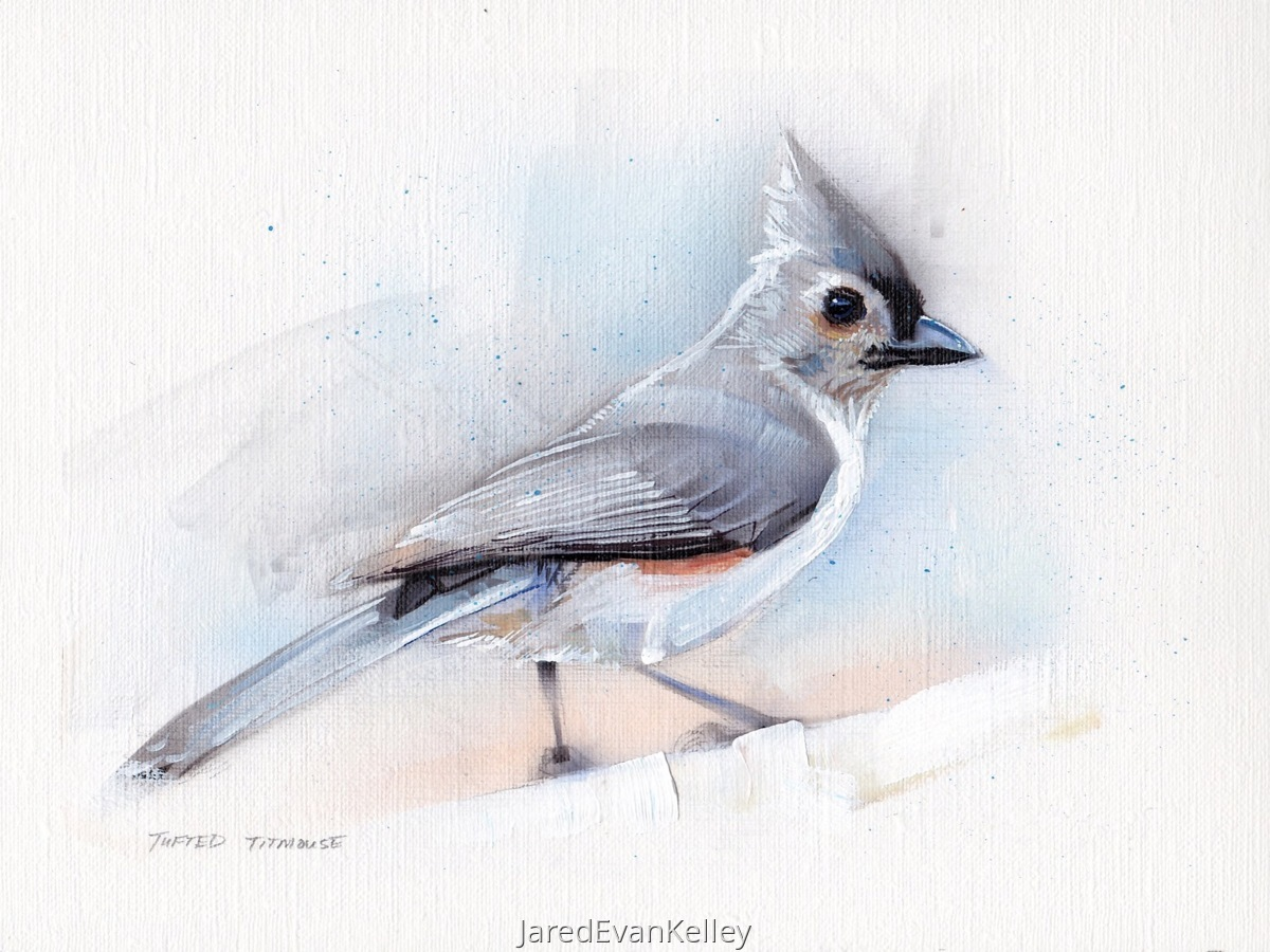 Tufted Titmouse (large view)