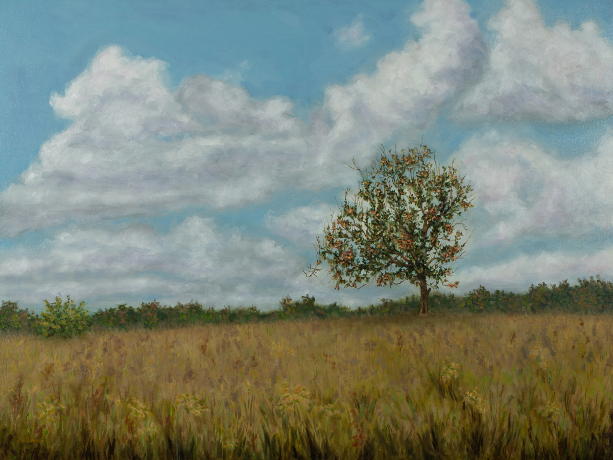 The Lone Pear Tree (large view)