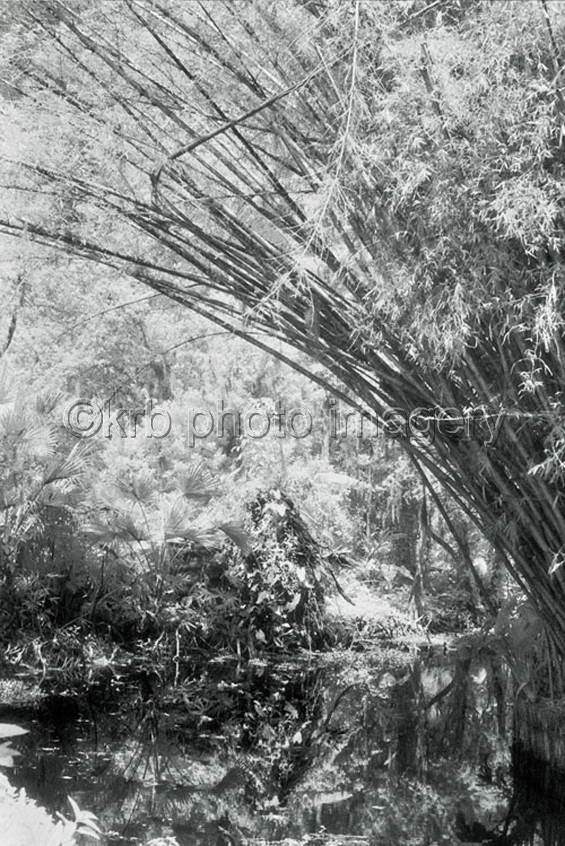 Bamboo (large view)