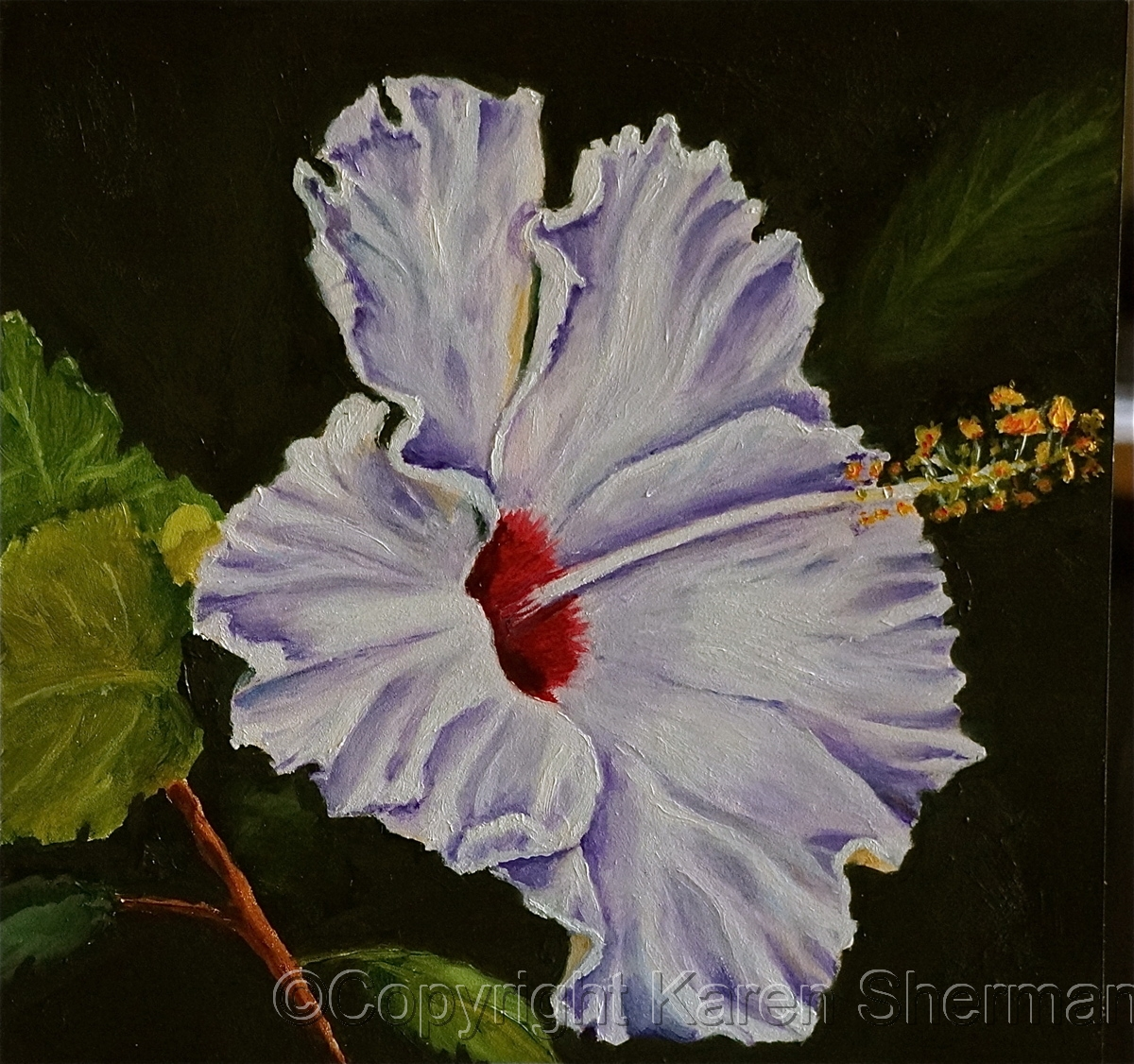 Wild Hibiscus 3 (large view)