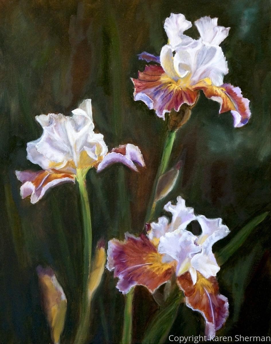 """Multi-Colored Iris"" (large view)"