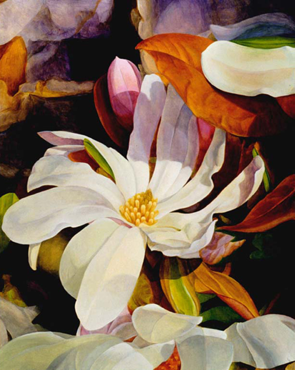 Star Magnolia (large view)