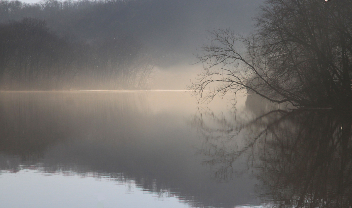 Backlit Mist at Radnor Lake (large view)