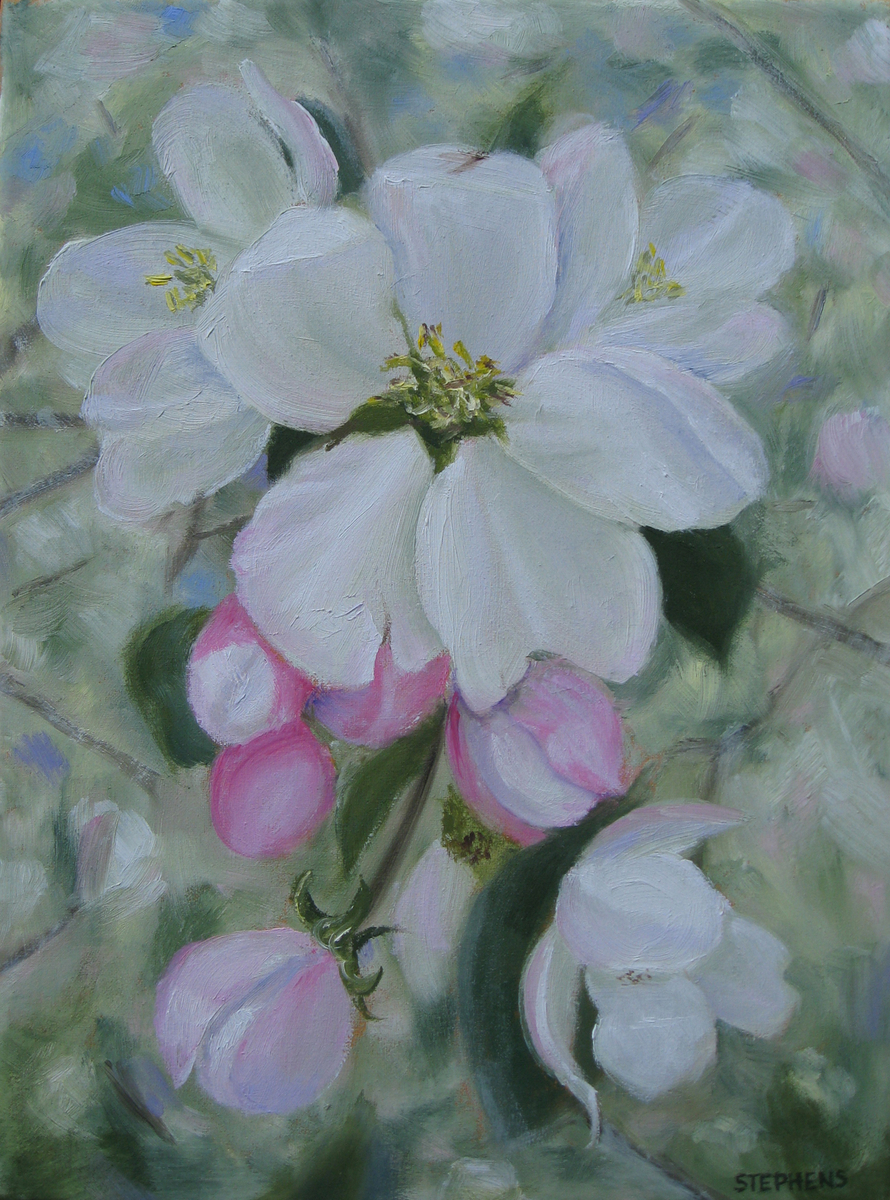 Apple Blossoms (large view)