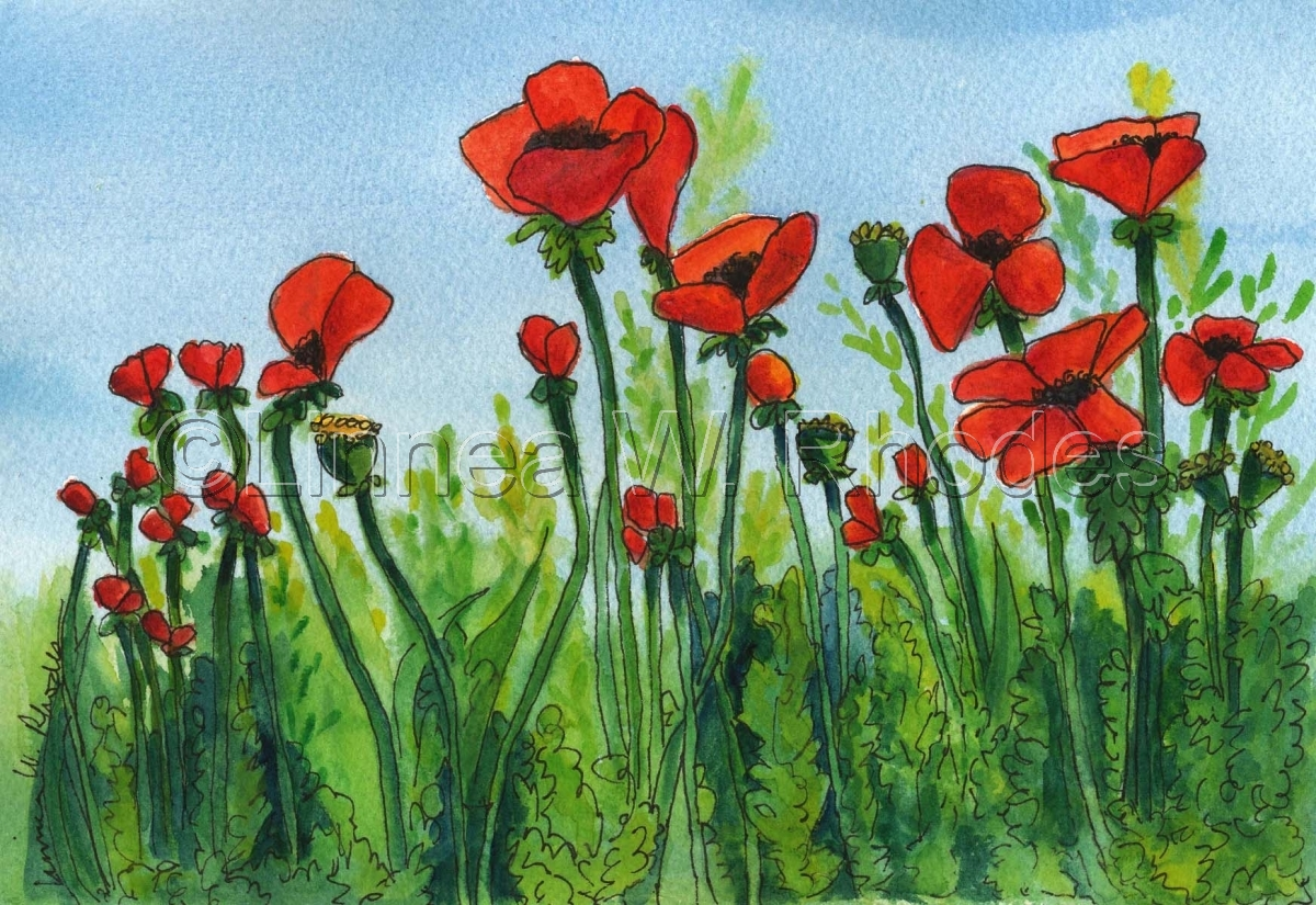 poppies-III (large view)
