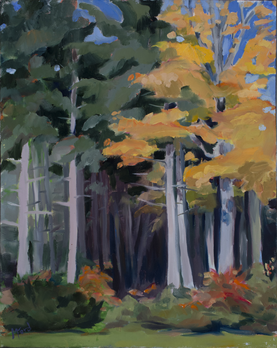 White Pine and Sugar Maples (large view)