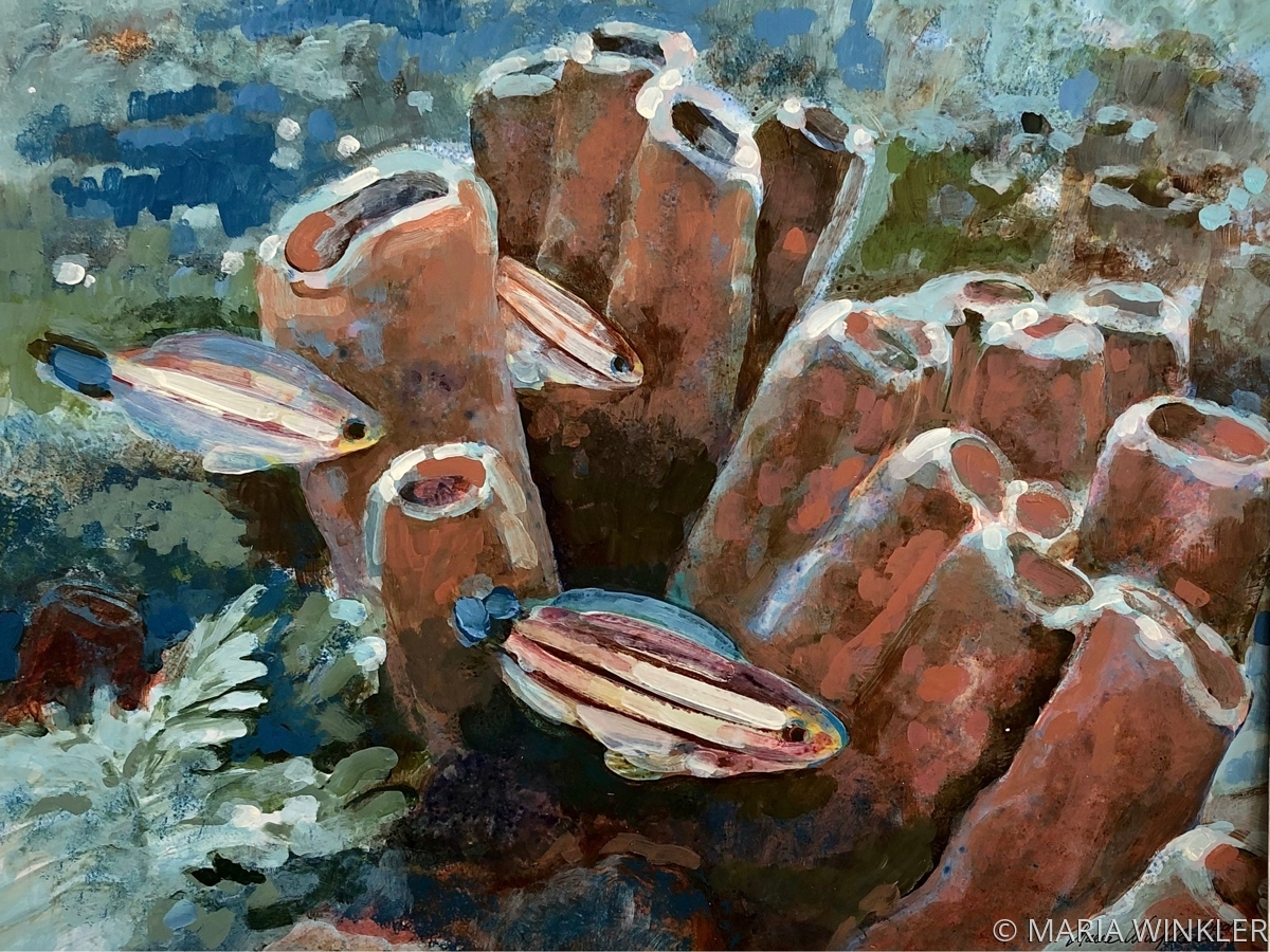 Tube Sponges with Striped Parrotfish (large view)