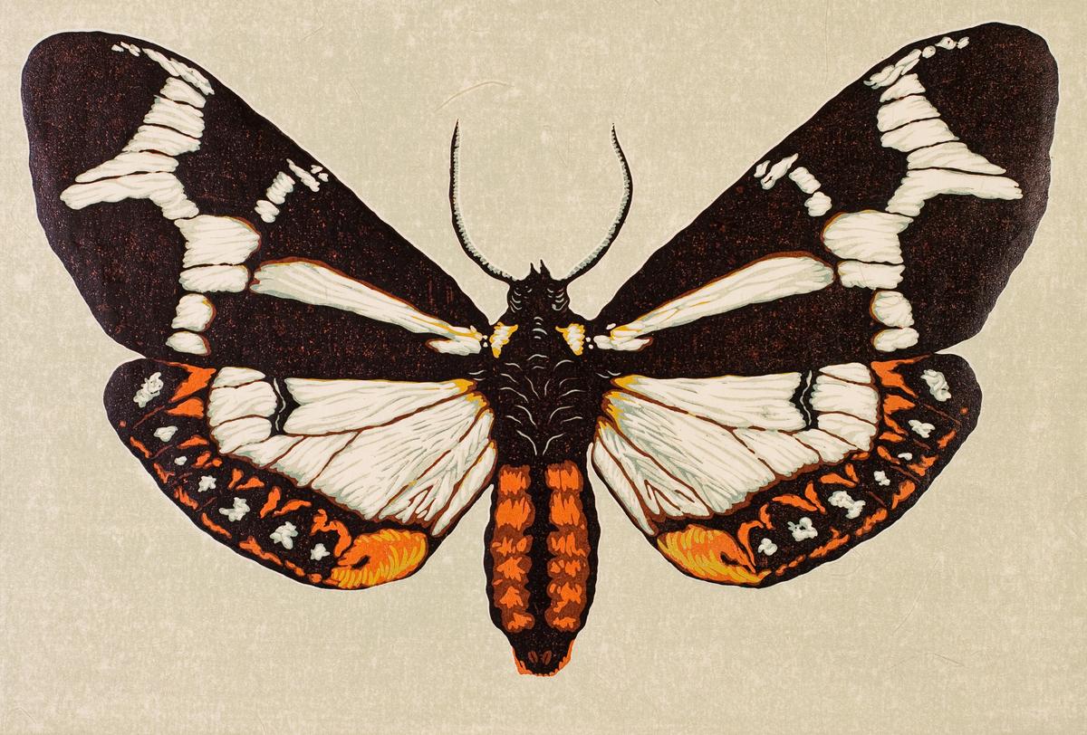 Moth Ten (large view)
