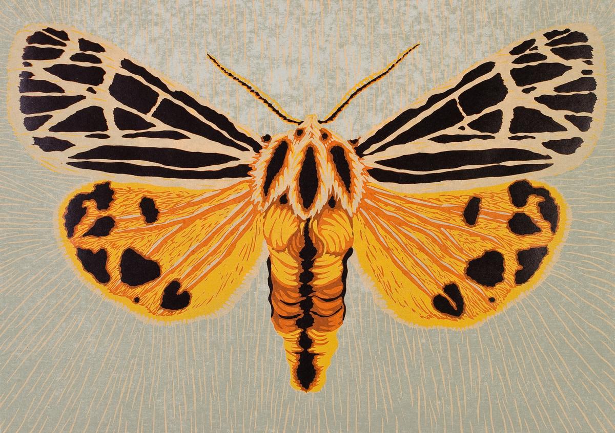 Moth Six (large view)