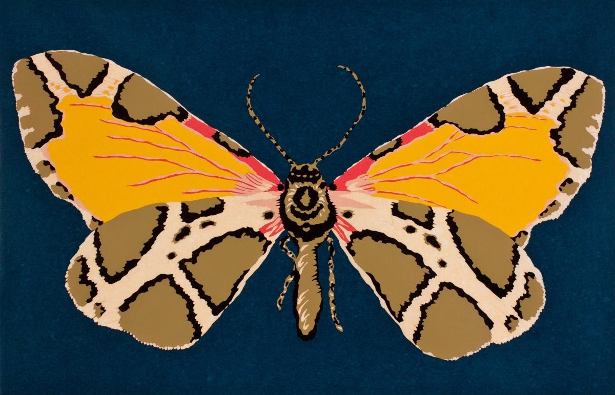 Moth Thirteen (large view)