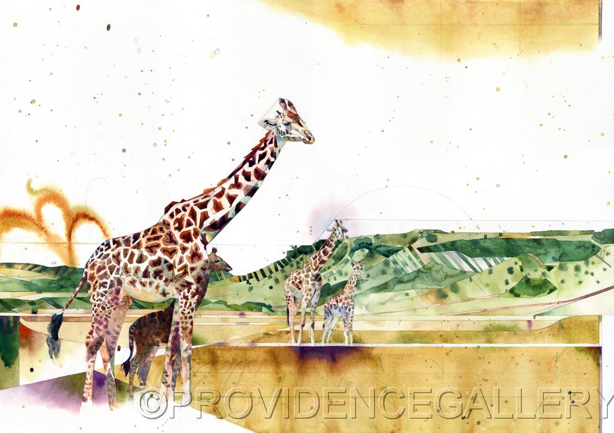 Giraffes (large view)