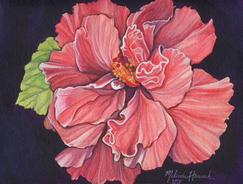 Double Hibiscus (large view)