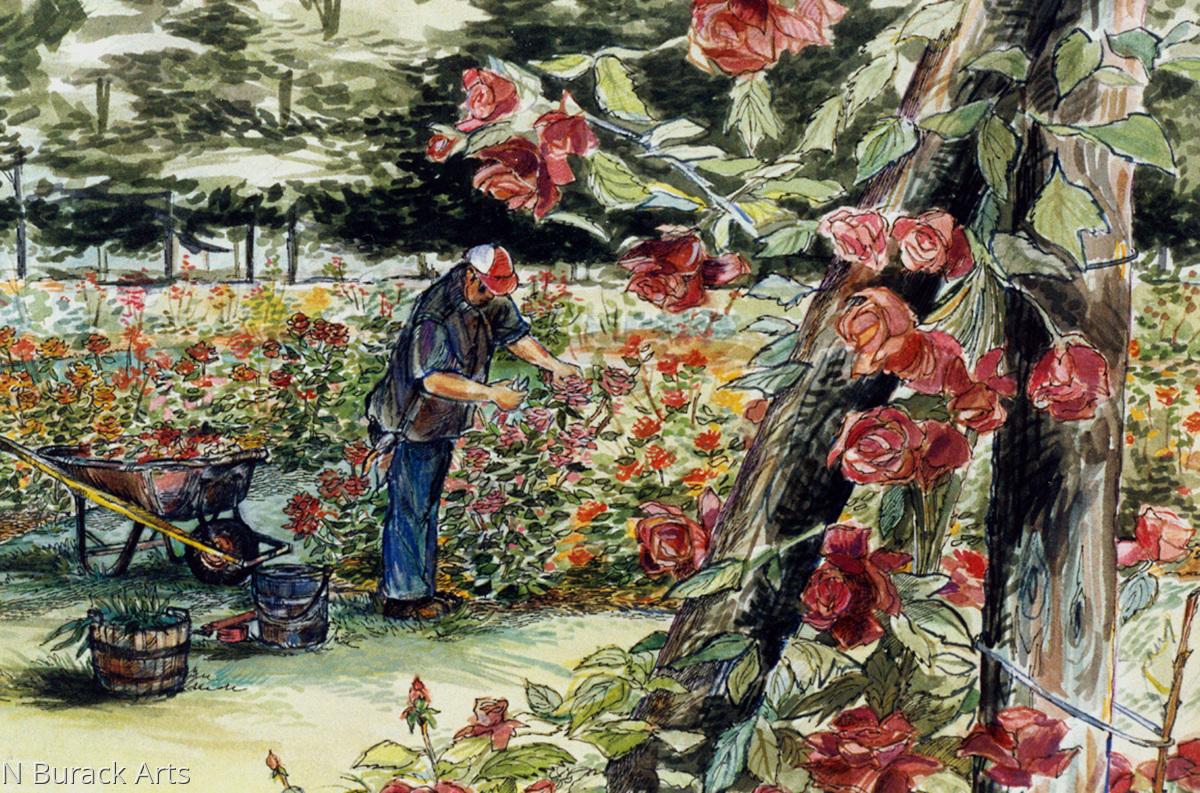 Bethlehem Rose Garden (large view)