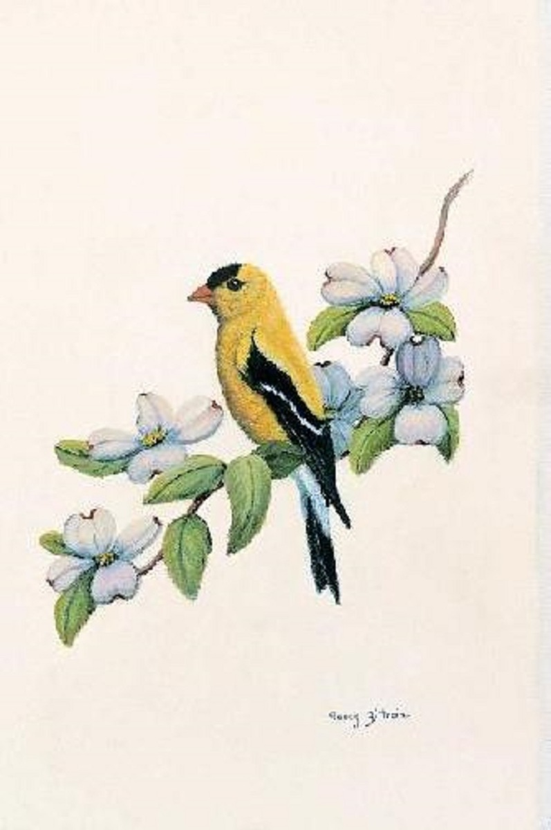 Goldfinch (large view)