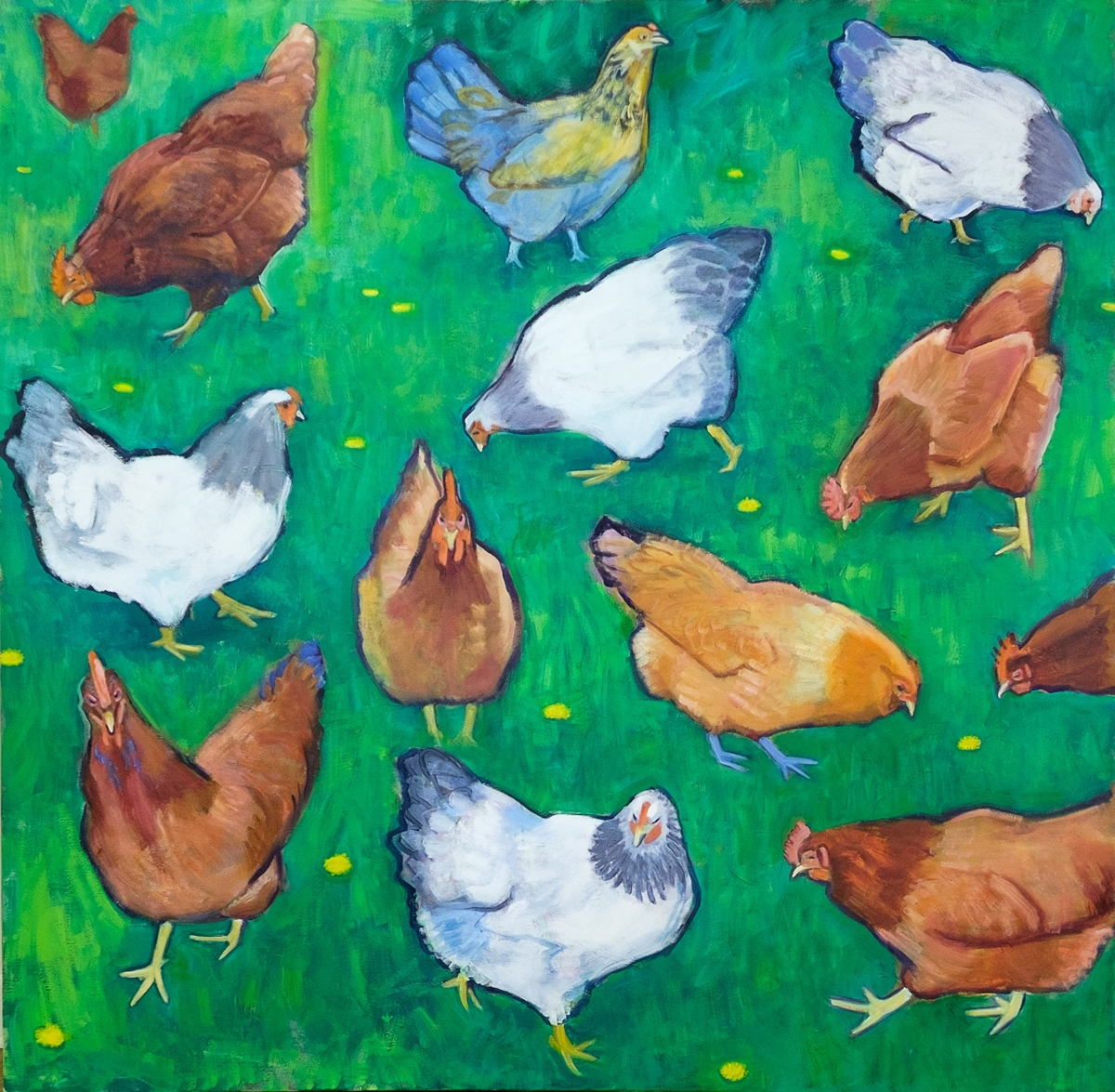 Chickens (large view)