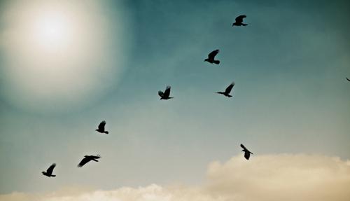 Flight of the Ravens
