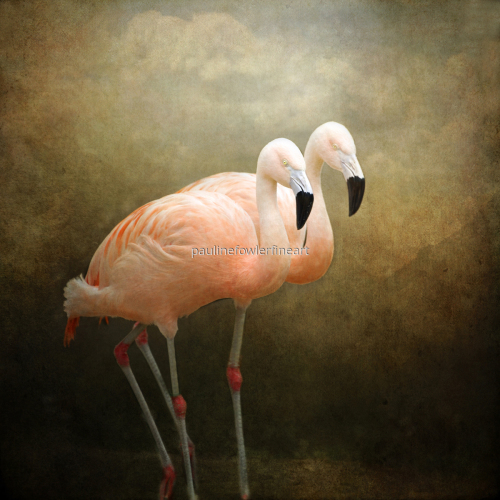 Flamingo talk