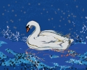 Salome the Swan (thumbnail)