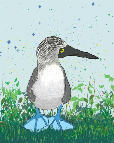 Byron the Blue Footed Booby (large view)