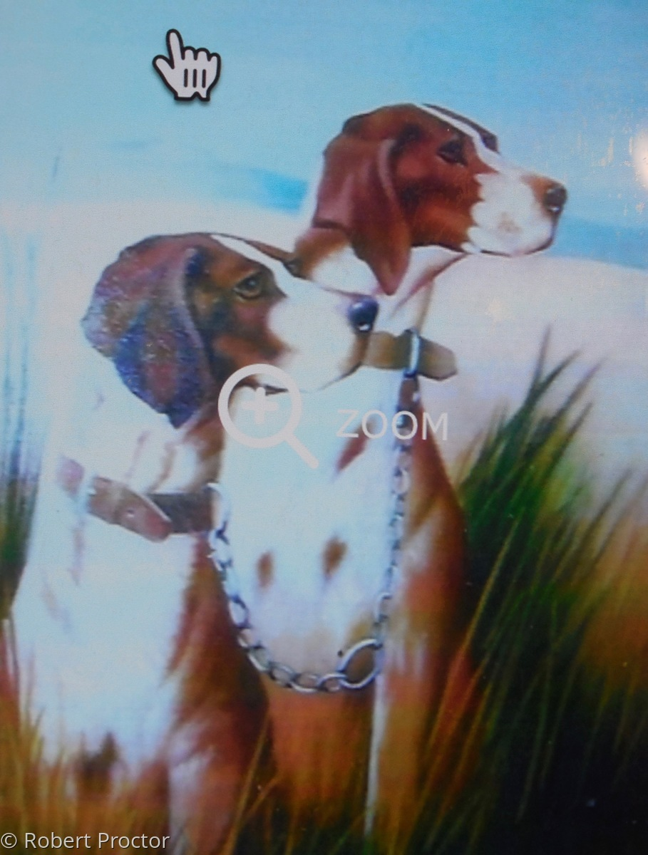 Two Champion Hunting Dogs (large view)