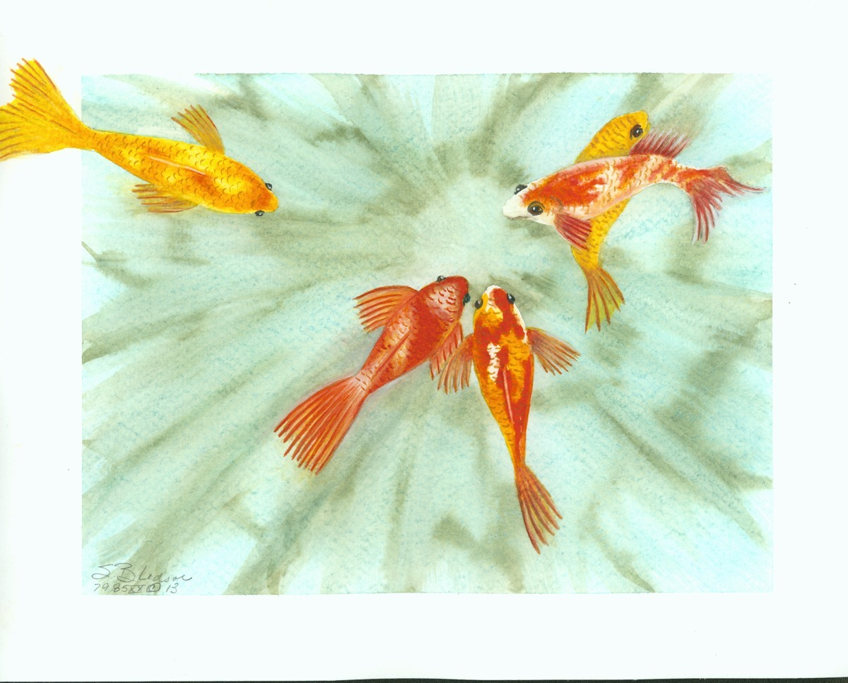 Gold Fish (large view)
