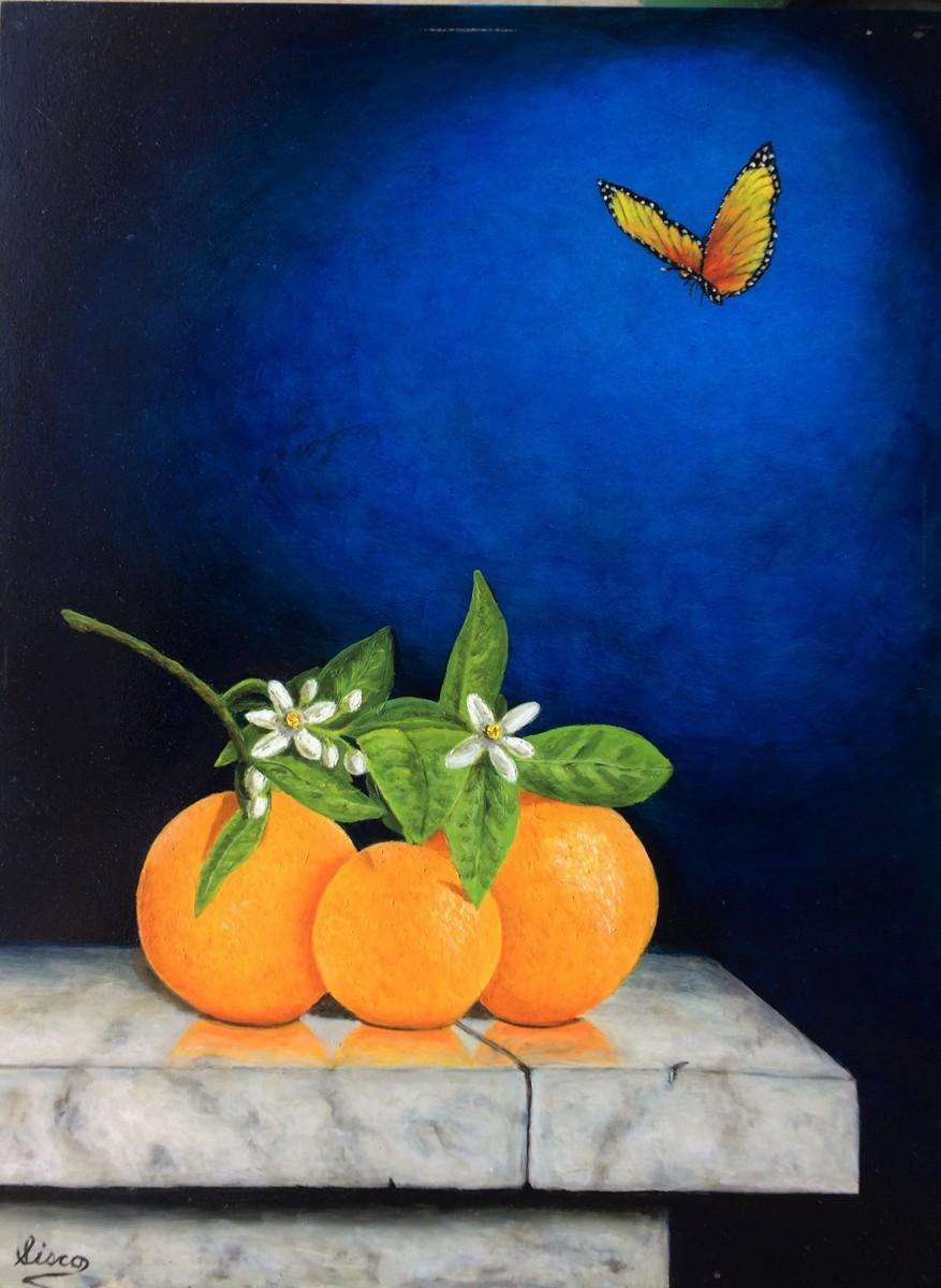 Orange you Beautiful! (large view)