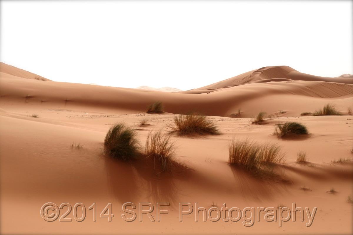 Sahara Morning (large view)